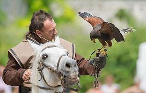 GRCF Les Animaux des R, Guillaume Roche, Spectacle fauconnerie équestre