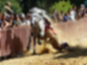 GRCF Les Animaux des R, Guillaume Roche, Ses compagnons en activité, Rinfantano