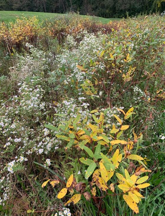 Around the Bend, Wildflowers.