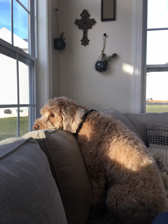 Lessons from a Contemplative Goldendoodle: Paying Attention