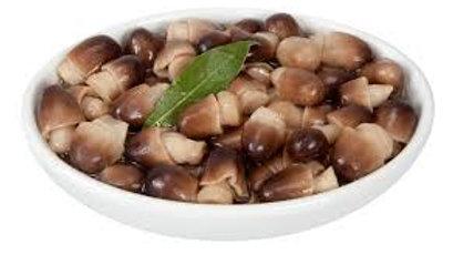 Funghi di muschio in vaso