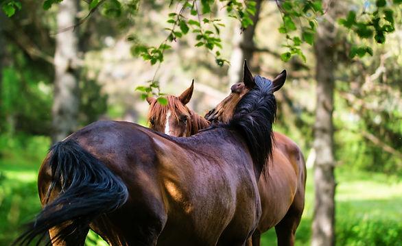 paardenvakantie - Malaga Spanje | Andalusie |