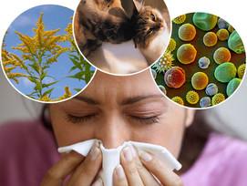 Vegateszt allergiavizsgálat