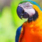 parrot.jpeg