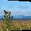 Thumbnail: Thistles of Applecross 40cm x 30cm framed print or canvas pri