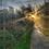 Thumbnail: Autumn Sun 8 40cm x 30cm framed print or canvas pri