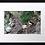 Thumbnail: Puffins  (1) 40cm x 30cm framed print or canvas print