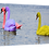 Thumbnail: Coloured swans 40cm x 30cm framed print or canvas print