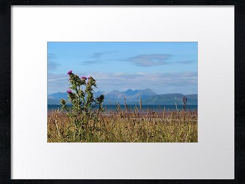 Thistles of Applecross 40cm x 30cm framed print or canvas pri