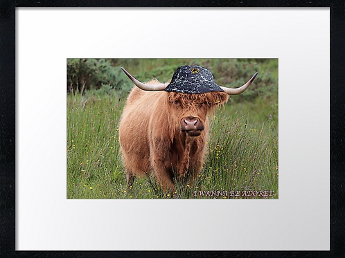 Stone Roses Highland cow 40cm x 30cm framed print or canvas print