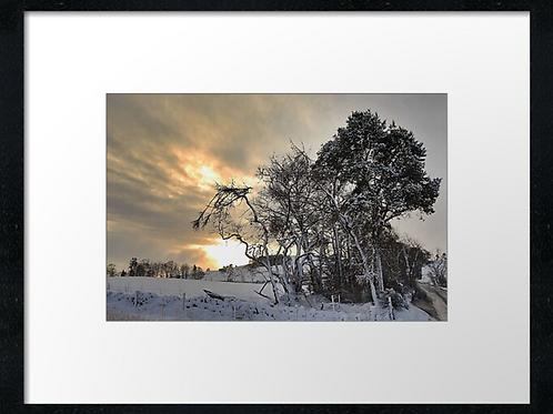 Winter sun print or canvas print (example shown 40cm x 30cm framed print