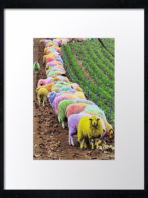 Coloured sheep 40cm x 30cm framed print or canvas print