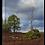 Thumbnail: Cairngorms tree  30cm x 40cm framed print, canvas print or A4, A3 m