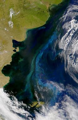 Chlorophyll image (source NASA)