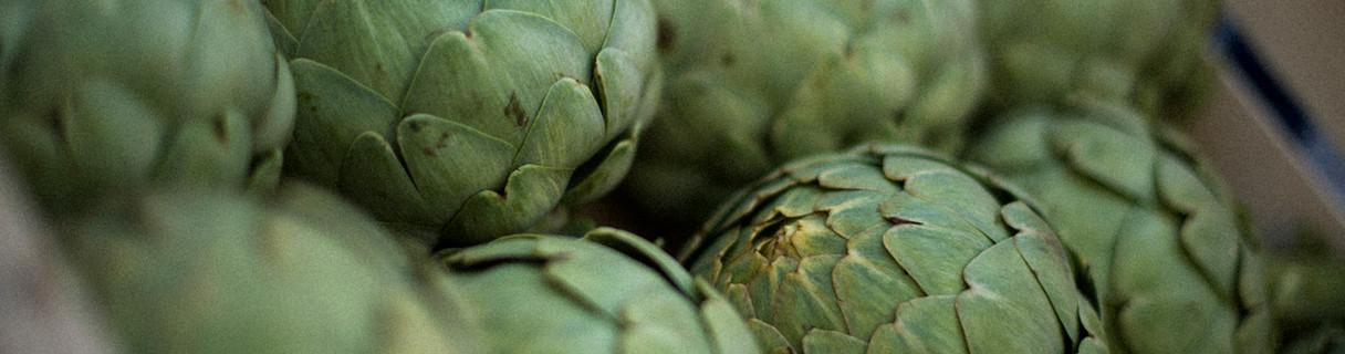 Artichaut Calico du Roussillon