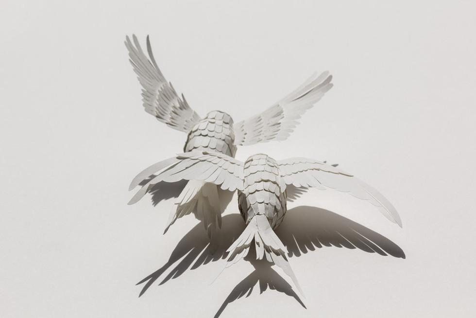 mathilde-nivet-oiseaux-papier.jpg