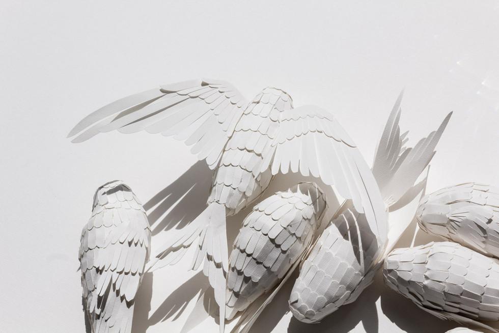 mathilde-nivet-oiseaux-papier-BM.jpg