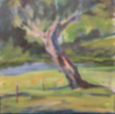puriri tree by a pond landscape painting
