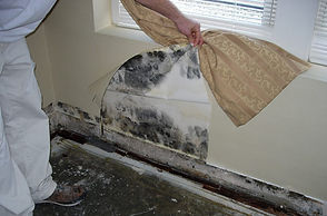 Mold Inspection, Mold Remediation