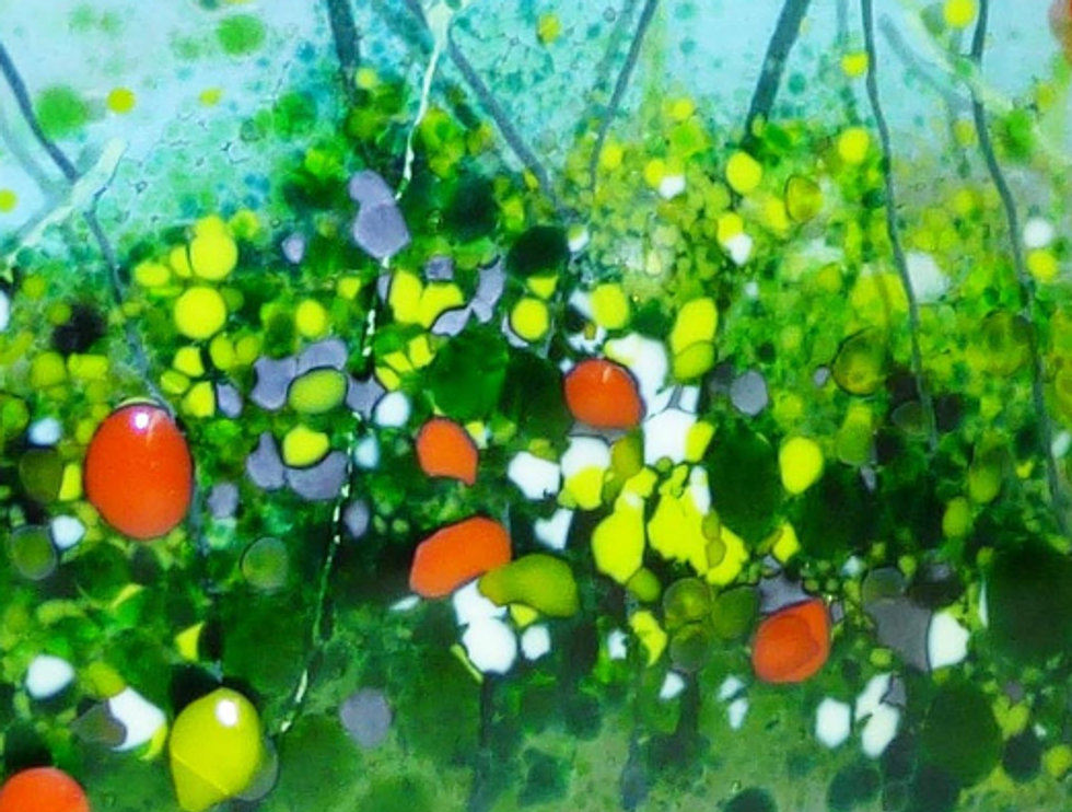 poppies landscape.jpg