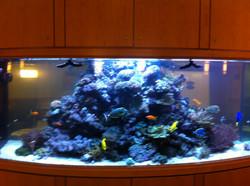 887 gallon - SW Coral Reef