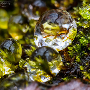 The Ice Bubble