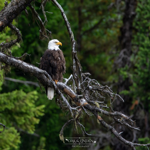 Mother Eagle 1