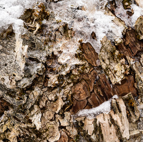 Birch Mosaic