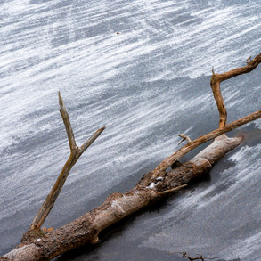 Icy Driftwood