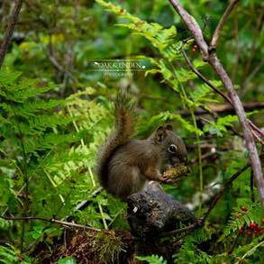 A Squirrel's Snack