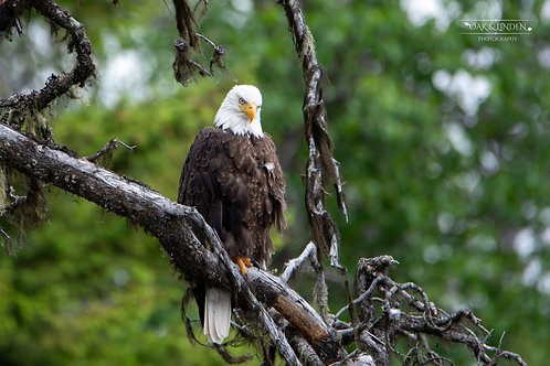 Mother Eagle Two