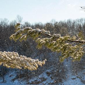 Sunny Pines
