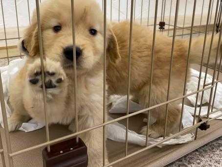 子犬販売中です