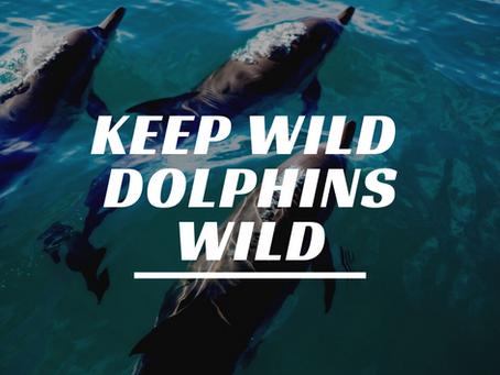 Keep Wild Dolphins Wild!