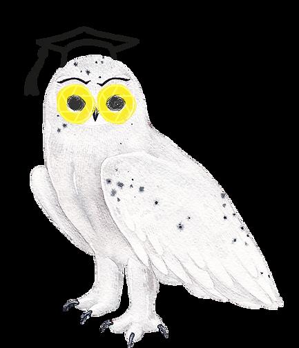 Arctic owl_.png