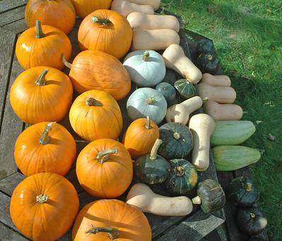 Fall Is Spectacular and Delicious!