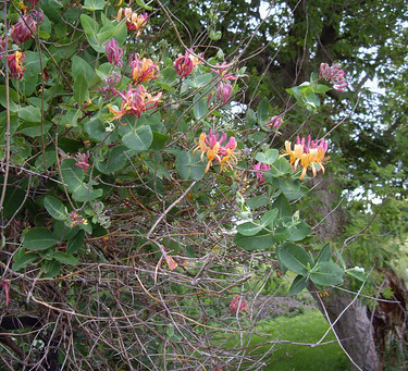 Flowers and Foliage and a Multitude of Slender Branches