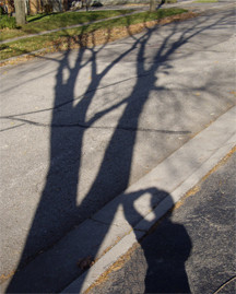 Tree and Me Shadows