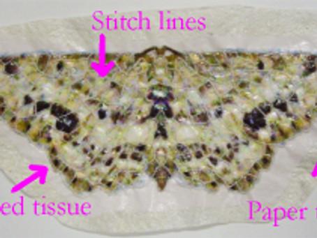Paper Applique for Paper Quilts