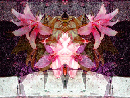Lily Spirit