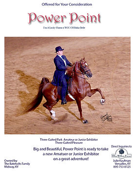 American Saddlebred_Power Point_For Sale