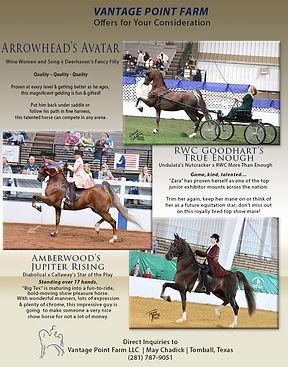 Vantage Point_Horses for Sale_Jan_2021.j