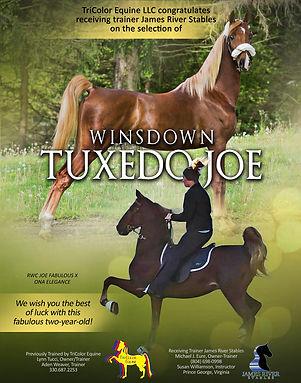 TRICOLOR-EQUINE_WINSDOWN-TUXEDO-JOE_DECE