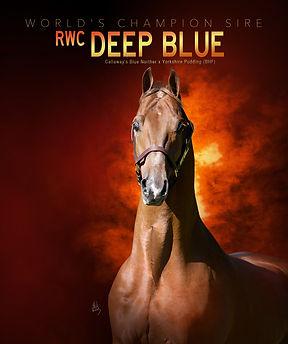 WILLOWBANK_DEEP-BLUE_Arabian-Times-magaz