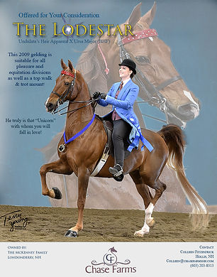 American Saddlebred_The Lodestar_For Sale