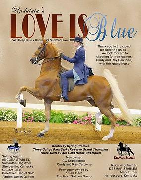 ANCORA_HOCH_UNDULATA'S LOVE IS BLUE_APRI