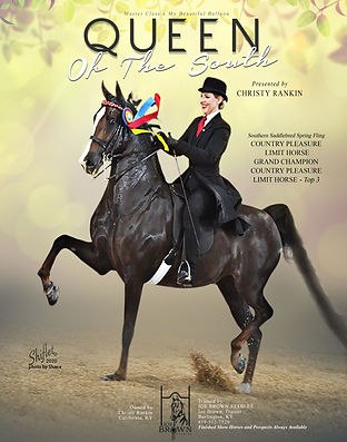 Queen of the South_American Saddlebred