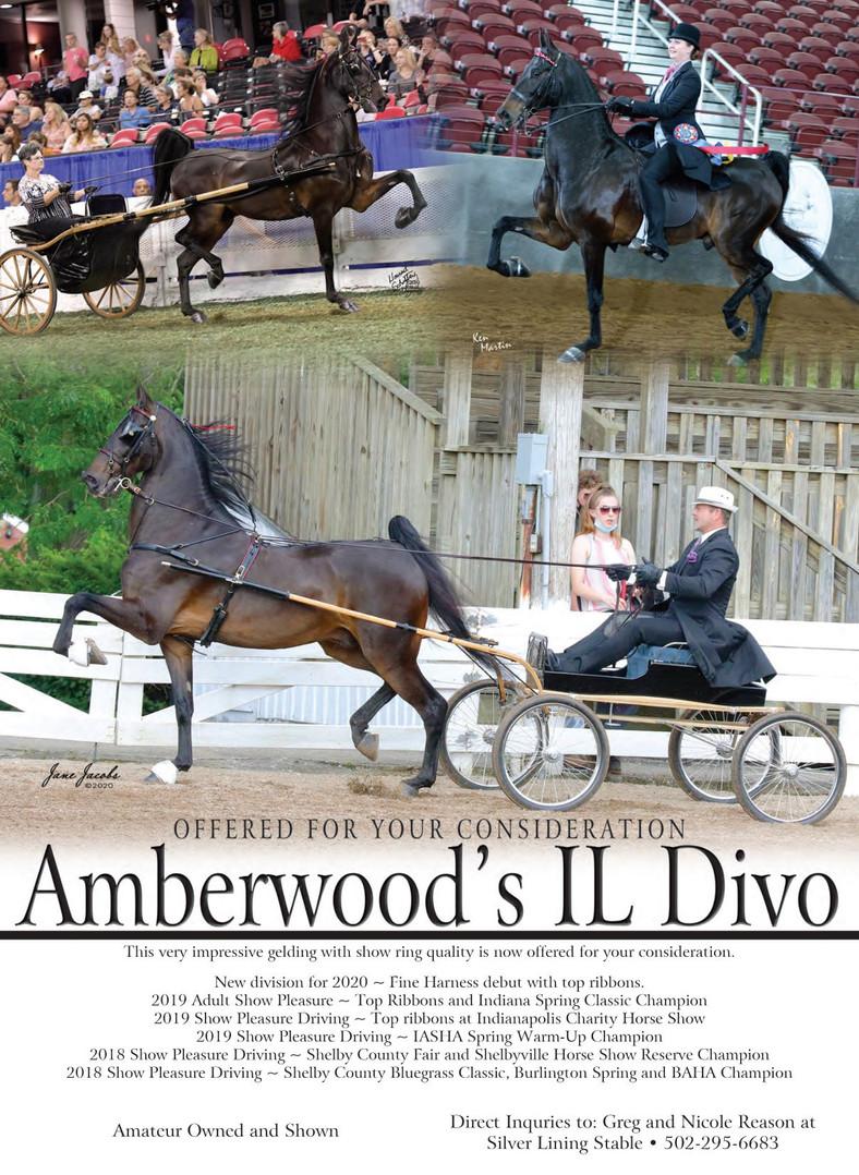 Silver_Lining_Amberwood's Il Divo_MM_Aug