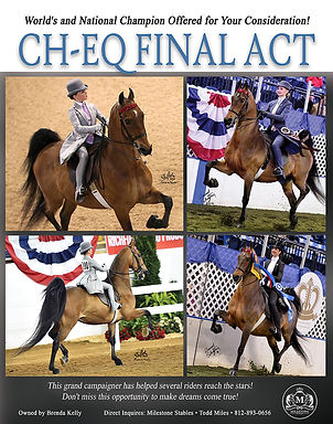 American Saddlebred_Equitation_For Sale