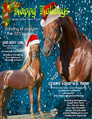 Ceder View_Holiday_Stallions.jpg